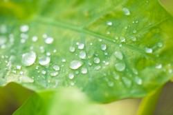 梅雨明けのイメージ画像