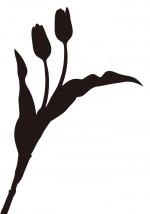 黒いチューリップのイメージ