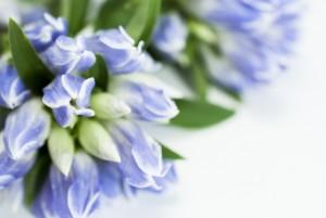青いリンドウの花束
