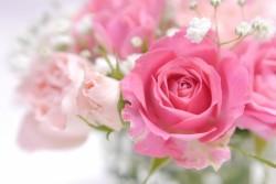 ピンクのバラの花束の写真