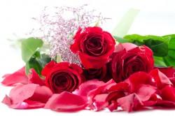 定番中の定番!赤いバラ!