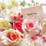 バラの花言葉を色別に大特集!贈る本数にも意味があったよ!