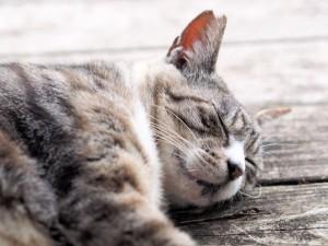 気持ちよさそうに昼寝をする猫