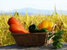 収穫した野菜の写真