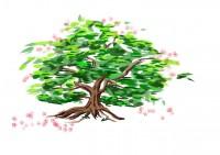 おみくじを結ぶことで木の生命力にあやかり、神様と縁を結ぶ